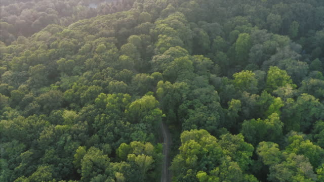 aerial view of road in the forest - 4k stock videos & royalty-free footage