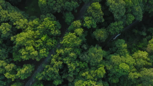 stockvideo's en b-roll-footage met aerial view of road in the forest - b roll