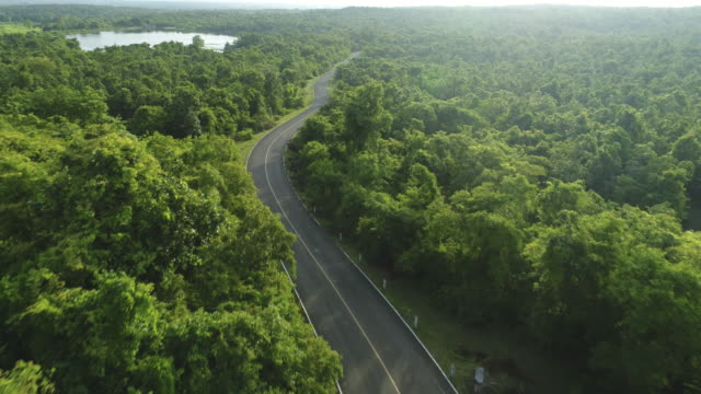 aerial view of road in the forest - street stock videos & royalty-free footage