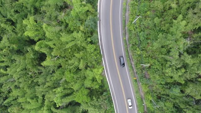 vídeos de stock e filmes b-roll de aerial view of road in the forest - vista de cima para baixo