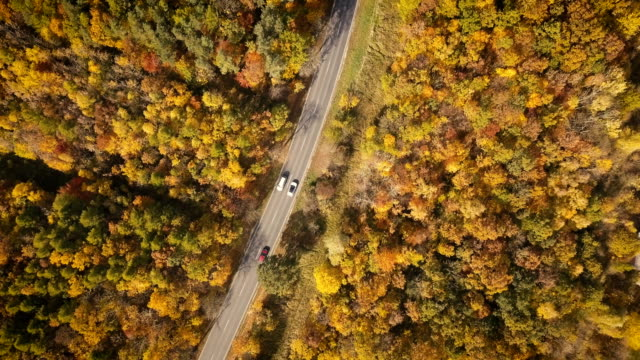 aerial view of road through autumnal forest - scenics nature stock videos & royalty-free footage