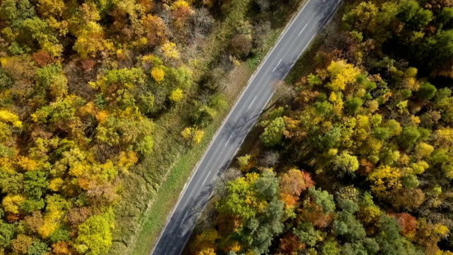 Aerial view of road through autumnal forest