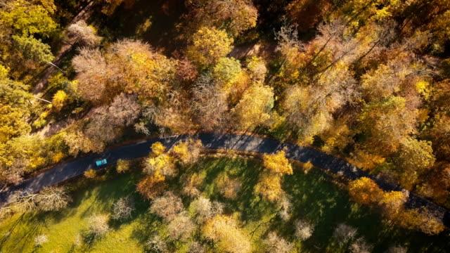 Luftaufnahme der Straße durch den herbstlichen Wald