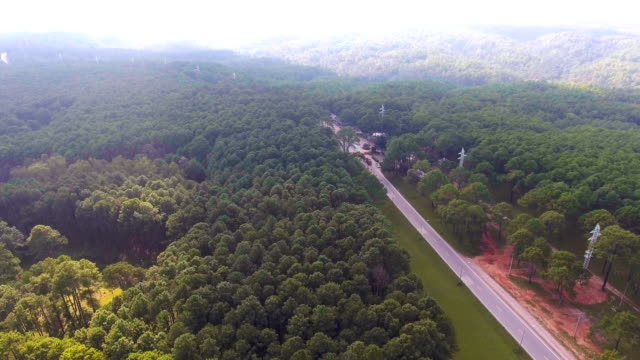 Aerial view of Road Through Tropical Pine Forest with Morning Sunlight, Thailand