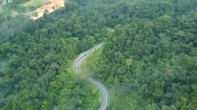 vídeos de stock e filmes b-roll de aerial view of road trip in forest to cameron highland, brinchang, malaysia - árvore tropical
