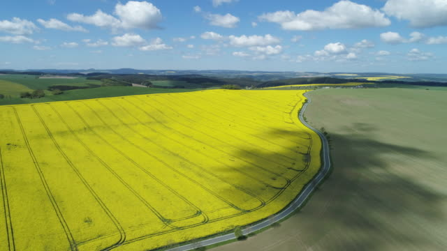 aerial view of rural road with oilseed rape field, springtime. saale-orla-kreis, thuringia, schleiz, germany. - turingia video stock e b–roll