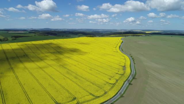 aerial view of rural road with oilseed rape field, springtime. saale-orla-kreis, thuringia, schleiz, germany. - turingia video stock e b–roll