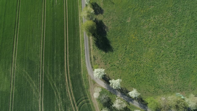 aerial view of rural road with white blossoming trees and agricultural fields, springtime. franconia, bavaria, germany. - feld stock-videos und b-roll-filmmaterial