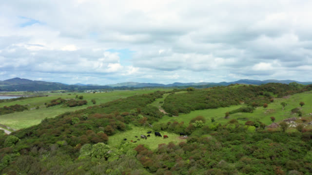 aerial view of rural scotland on an overcast day - johnfscott stock videos & royalty-free footage