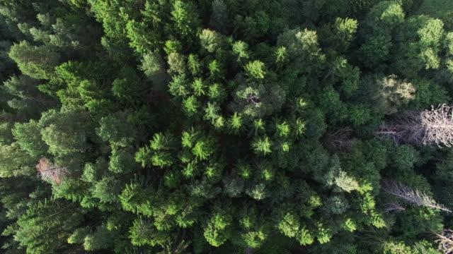 aerial view of salt marsh - helsinki, finland - finnland stock-videos und b-roll-filmmaterial
