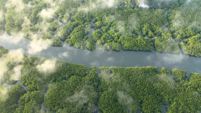aerial view of samet nangshe in phang nga, thailand - mangrove forest stock videos & royalty-free footage