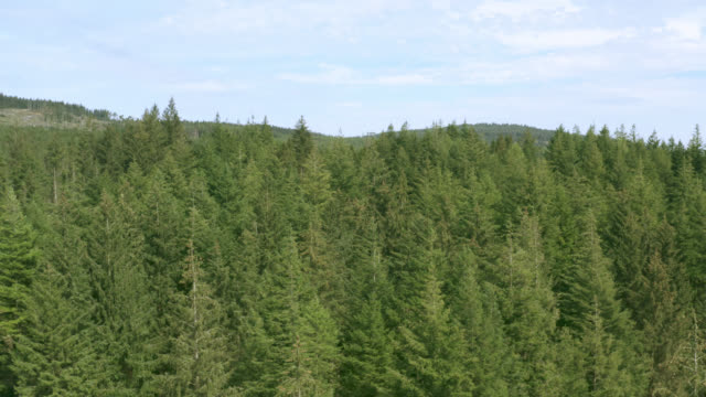 vídeos de stock e filmes b-roll de aerial view of scottish woodland - abeto