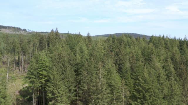 vídeos y material grabado en eventos de stock de vista aérea del bosque escocés - johnfscott