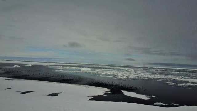 Aerial view of sea birds, mostly eider ducks, taking off from the ice floe edge, northern Baffin Island, Canada. Footage was taken in late May before the ice has melted.