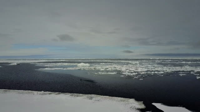 stockvideo's en b-roll-footage met aerial view of sea ice and the ice floe edge with some sea birds in the background, admiralty inlet, northern baffin island, canada. - noordelijke grote oceaan