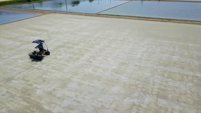 Aerial view of Sea salt process made from pile of salt in the salt pan by worker at rural area of Thailand, Samut Songkhram, Samut Sakhorn