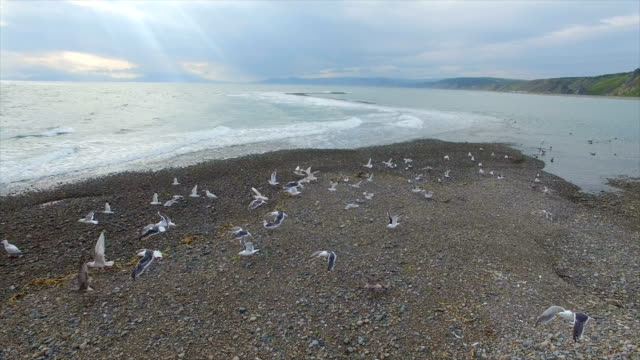 Aerial view of Seagulls nearby Coastline,Magadan,China.