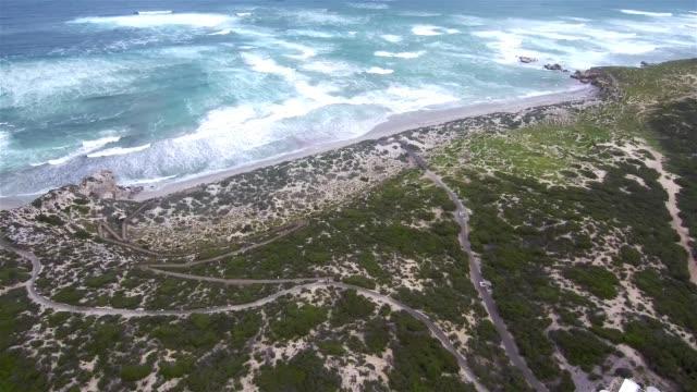aerial view of seal bay conservation park - south australia bildbanksvideor och videomaterial från bakom kulisserna