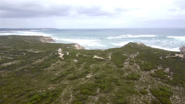 vidéos et rushes de aerial view of seal bay conservation park - cliff