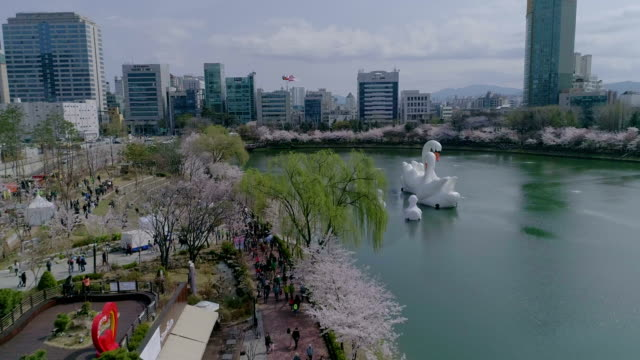 Aerial view of Seokchonhosu Lake with cherry blossom and swan boats near Lotte World amusement park in Spring