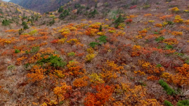 aerial view of seoraksan mountain national park covered with many maple trees in autumn - maple tree stock videos and b-roll footage