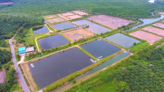 aerial view of shrimp farm in rural area - alga video stock e b–roll