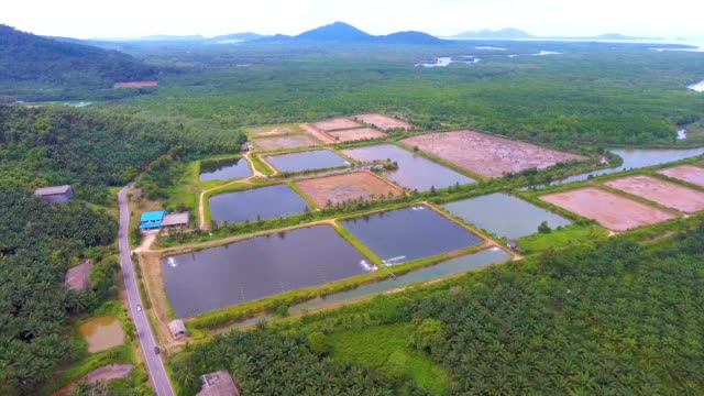 Luftaufnahme des Garnelenfarm