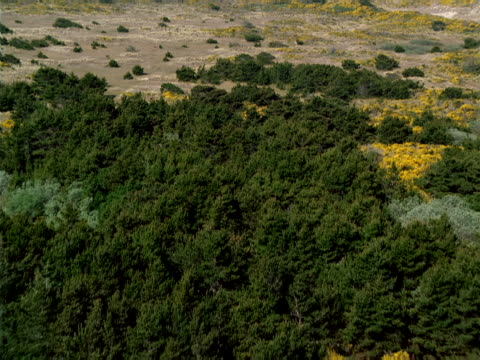 aerial view of shrubs and firs - shrubland stock videos & royalty-free footage