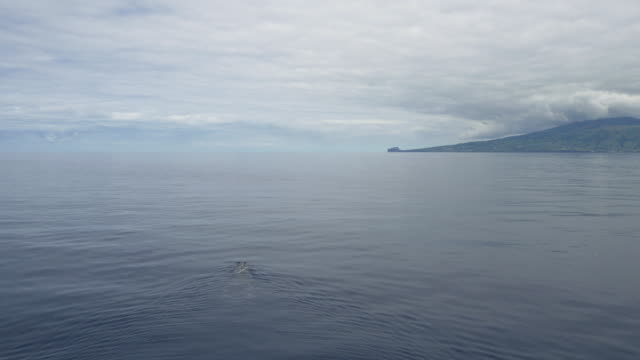 aerial view of single sperm whale swimming in vast ocean - sperm whale stock videos & royalty-free footage