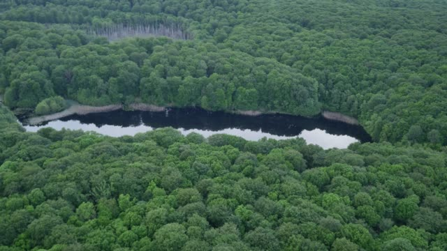 aerial view of small pond in dense deciduous forest - deciduous stock videos & royalty-free footage