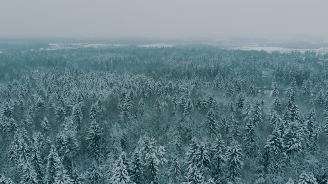 vídeos de stock, filmes e b-roll de vista aérea da cidade pequena perto de moscovo durante o inverno - pinhal