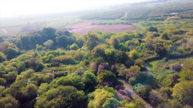 aerial view of snir nature reserve (hatsbani) with water streams and lush vegetation /galilee, israel - nature reserve stock videos & royalty-free footage