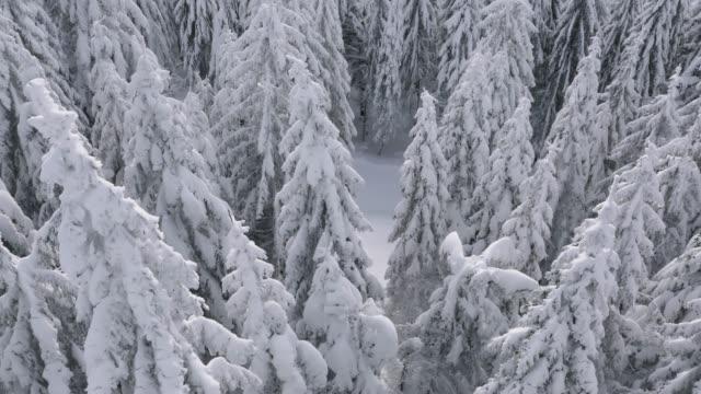 雪の空撮は、冬の森を覆われています。 - シュバルツバルト点の映像素材/bロール