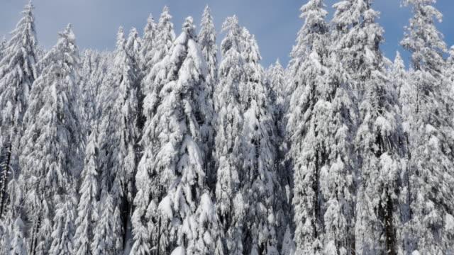 Luftaufnahme von Schnee bedeckt Wald