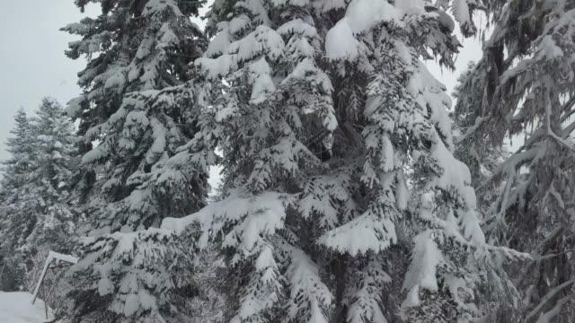 luftbild von schneebedeckte bäume - georgia stock-videos und b-roll-filmmaterial