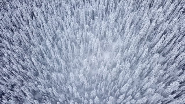 aerial view of snow forest on the mountain at the winter time - panoramic stock videos & royalty-free footage