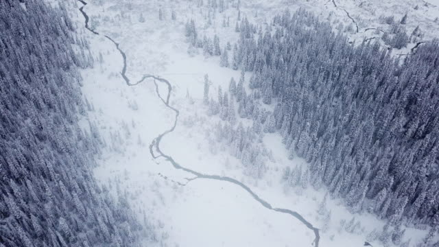aerial view of snowing on the pine forest in winter - winter stock videos & royalty-free footage