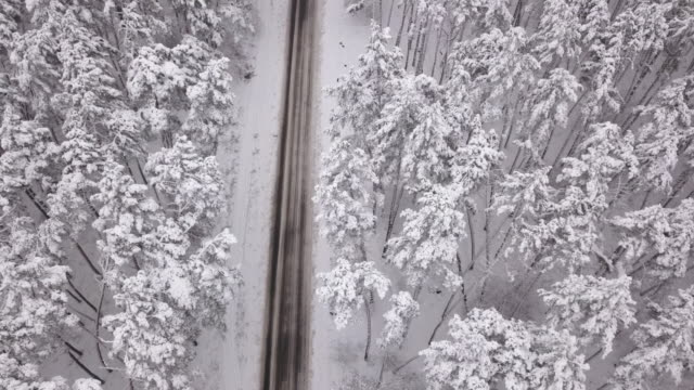aerial view of snowy forest with a road. captured from above with a drone - finlandia video stock e b–roll