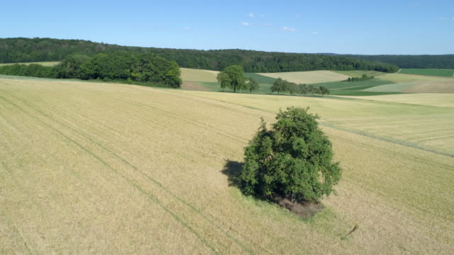aerial view of solitude tree in agricultural field in rural landscape, summer. franconia, bavaria, germany. - majestic stock videos & royalty-free footage