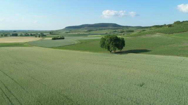 vidéos et rushes de aerial view of solitude walnut tree in rural landscape with agricultural fields. franconia, bavaria, germany, europe. - sortir du lot