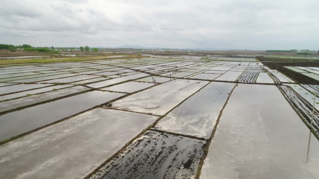 vídeos de stock, filmes e b-roll de aerial view of spring sowing on may 15 2017 in wuchang heilongjiang province china wuchang is a major rice growing area in northern china - só um homem idoso
