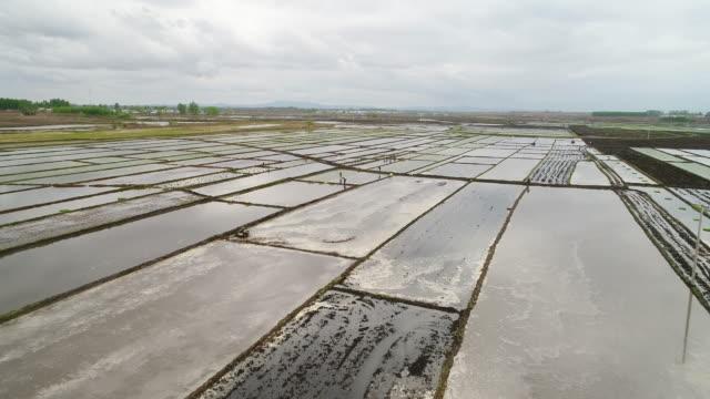 vídeos y material grabado en eventos de stock de aerial view of spring sowing on may 15 2017 in wuchang heilongjiang province china wuchang is a major rice growing area in northern china - un solo hombre mayor