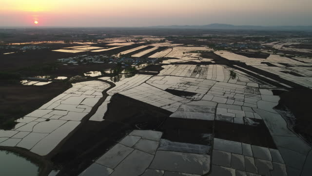 aerial view of spring sowing on may 15 2017 in wuchang heilongjiang province china wuchang is a major rice growing area in northern china - einzelner senior stock-videos und b-roll-filmmaterial