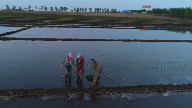 Aerial view of spring sowing on May 15 2017 in Wuchang Heilongjiang Province China Wuchang is a major rice growing area in northern China