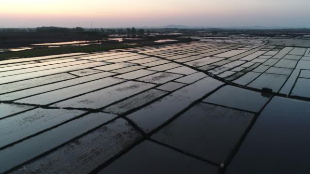aerial view of spring sowing on may 15 2017 in wuchang heilongjiang province china wuchang is a major rice growing area in northern china - endast en pensionärsman bildbanksvideor och videomaterial från bakom kulisserna