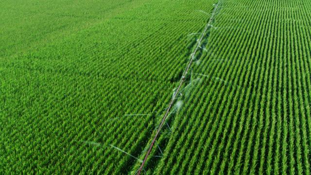 vídeos y material grabado en eventos de stock de vista aérea del maíz de riego de aspersores - equipos de riego