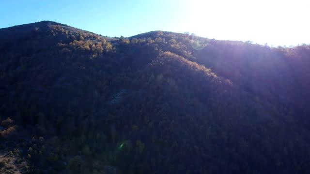 Luftaufnahme von Fichtenwald