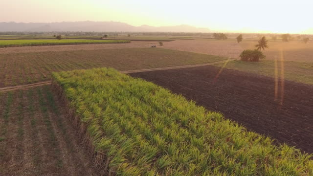 vídeos de stock, filmes e b-roll de vista aérea da exploração agrícola orgânica do bastão de açúcar com luz solar bonita - sugar cane