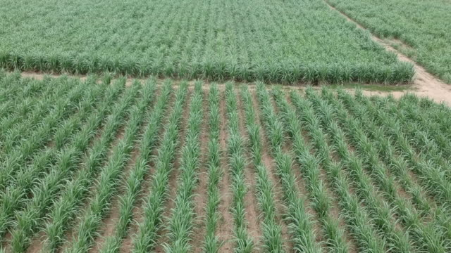 aerial view of sugar cane - pakistan stock videos & royalty-free footage