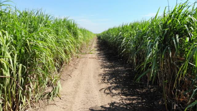 aerial view of sugarcane field - field stock videos & royalty-free footage